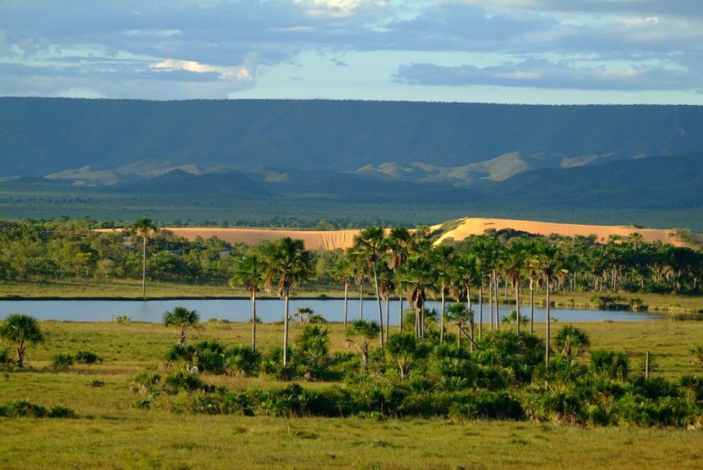 Viajar para o Jalapão é ver Dunas e veredas do cerrado