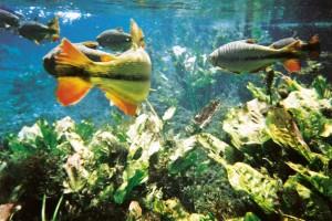 Peixes Ana Laura Ravagnani 300x200 - Turismo de natureza: 8 melhores destinos no Brasil