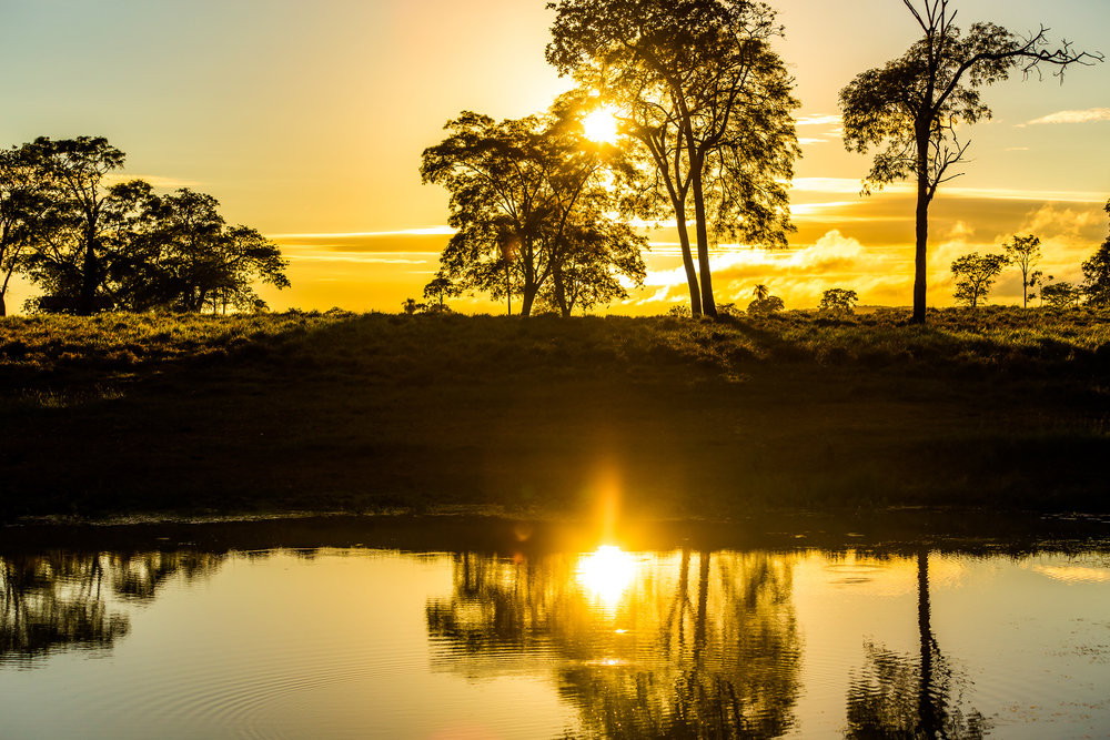 Depositphotos 42880813 m 2015.jpg - Pantanal Matogrossense: o destino para observação da vida selvagem