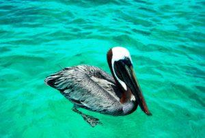 DSCN1231 e1475778893103 300x202 - Ilha de Páscoa ou Ilhas Galápagos: qual destino escolher?