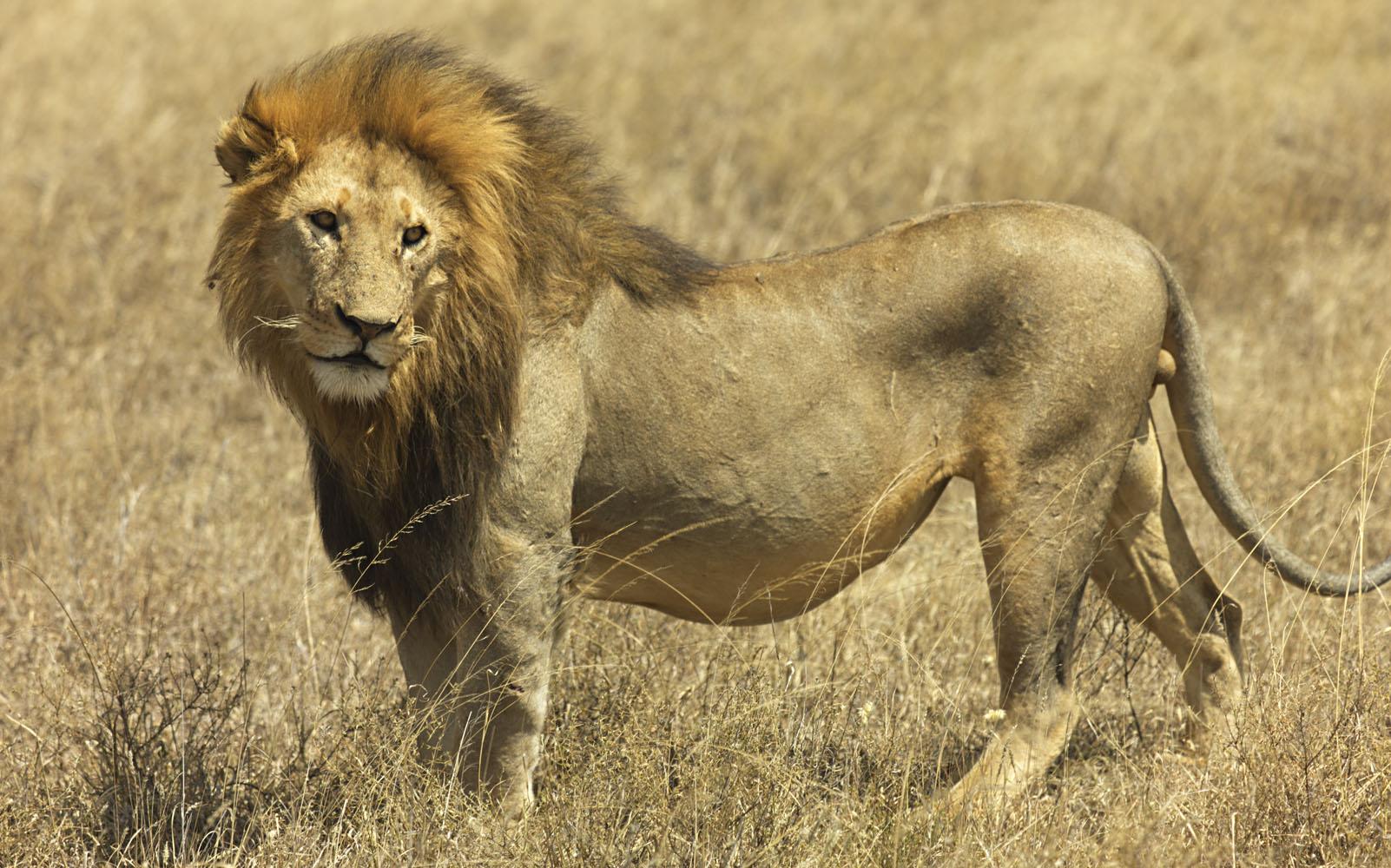africa rc 0001 - Viagem à África do Sul: descubra esse surpreendente destino