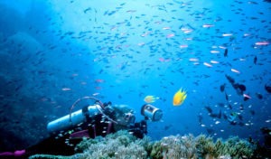 turismo fiji por que incluilo na sua proxima viagem entenda 300x176 - Turismo na Oceania: desvendando as belezas do outro lado do mundo