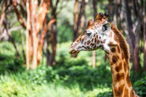 Pensando em viajar? 4 dicas sobre o que fazer no Quênia!