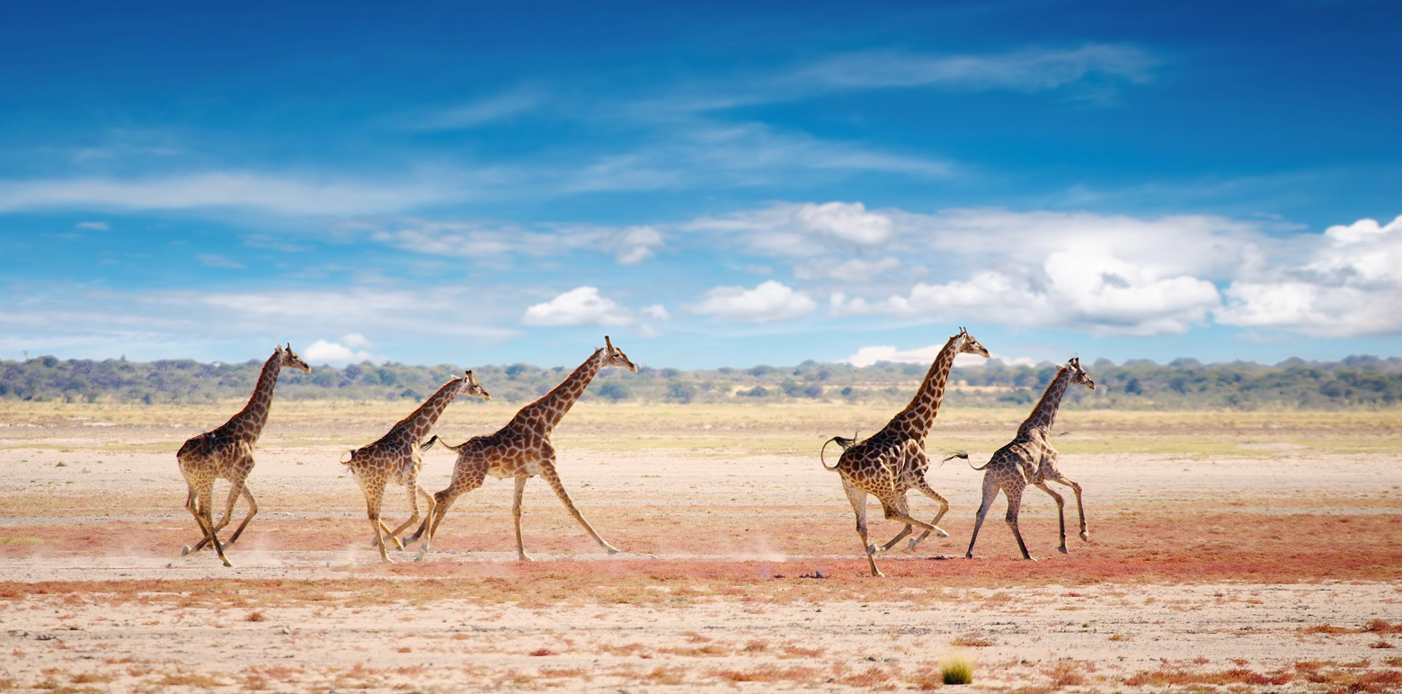Namibia Shutterstock 2 - Confira 6 dicas para fazer safári na África que você precisa conhecer!
