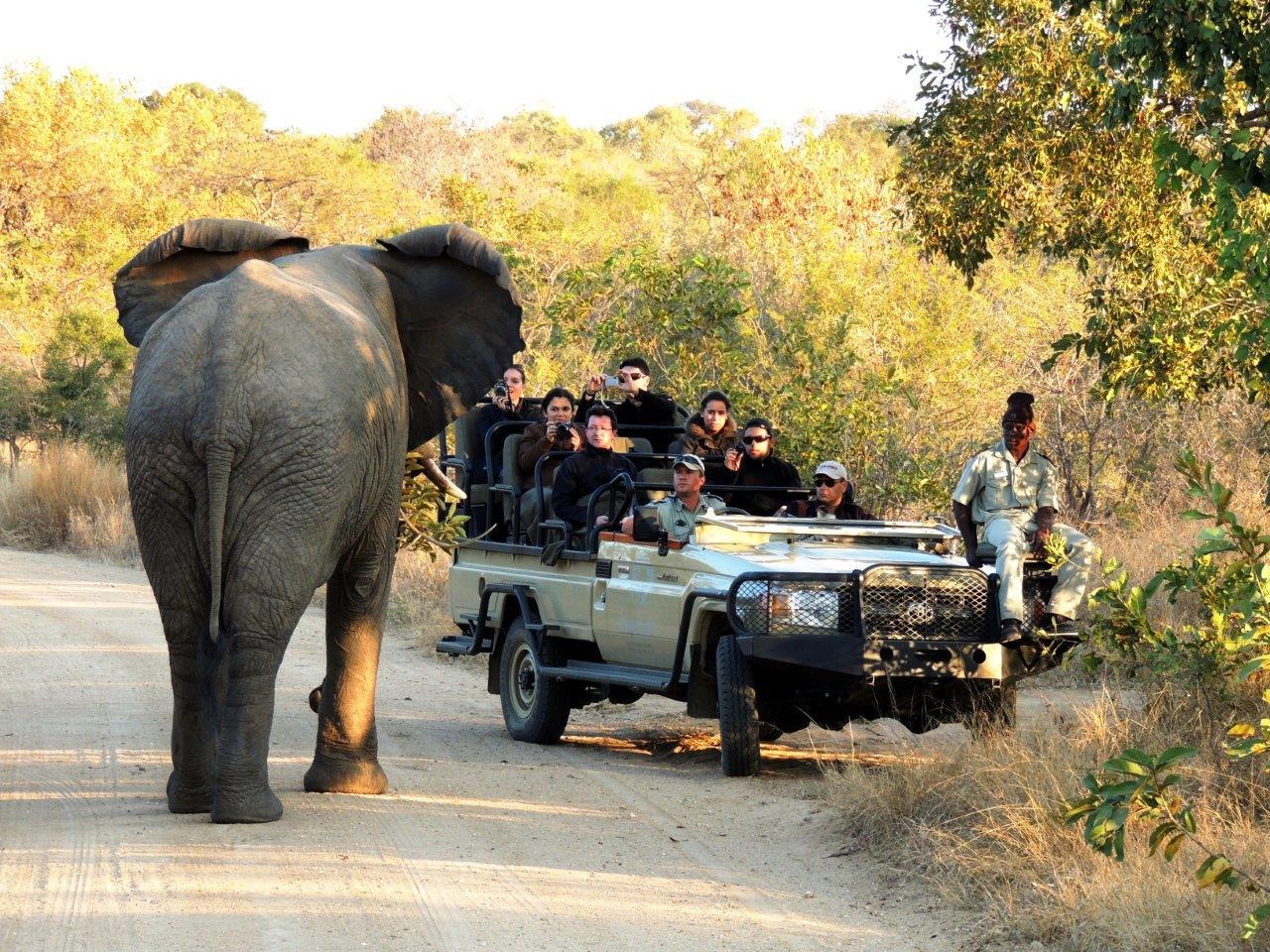 Pacote de viagens para áfrica do Sul Kriger park - Confira 6 dicas para fazer safári na África que você precisa conhecer!