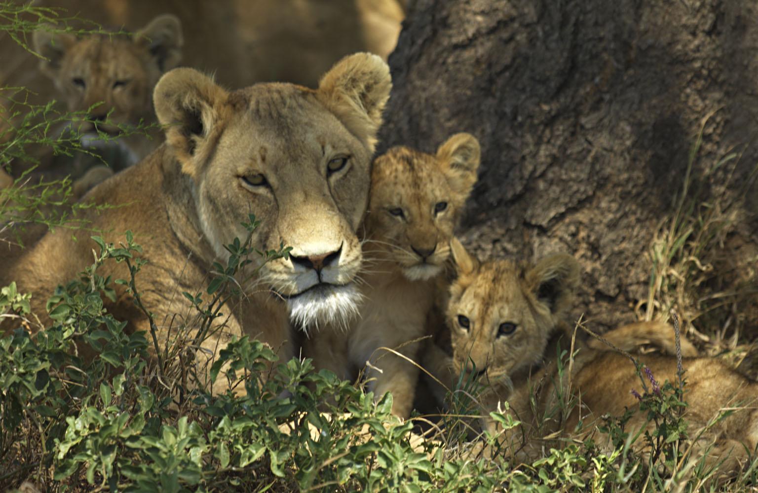 Seringueti tanzania - Turismo na África: 10 países imperdíveis que você precisa conhecer!