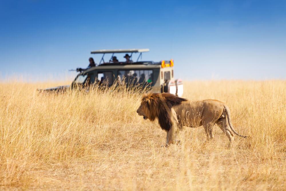 confira 6 safaris na africa que voce precisa conhecer - Confira 6 dicas para fazer safári na África que você precisa conhecer!