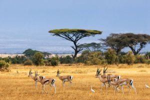 Turismo na África: 10 países imperdíveis que você precisa conhecer!