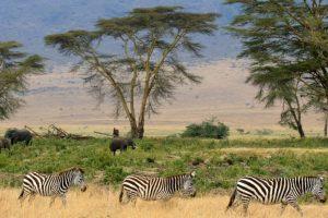 Selecionamos 4 motivos para conhecer a Tanzânia