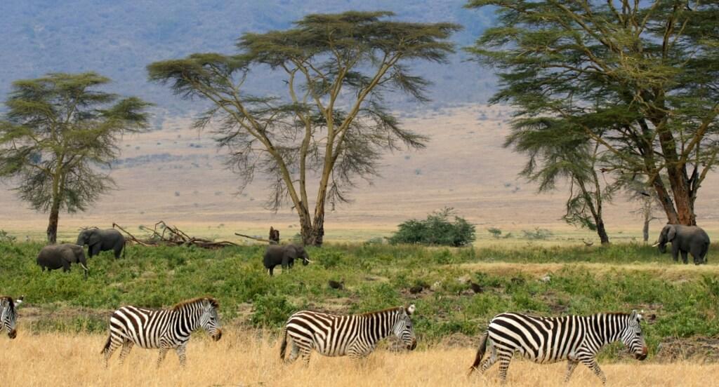 105957 selecionamos 4 motivos para conhecer a tanzania - Turismo na África: 10 países imperdíveis que você precisa conhecer!