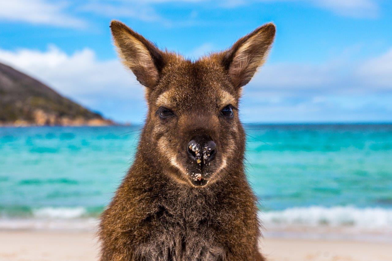 Praias da Austrália Tourism Australia Wineglass Bay Beach - Conheça as mais belas praias da Austrália e planeje sua viagem!