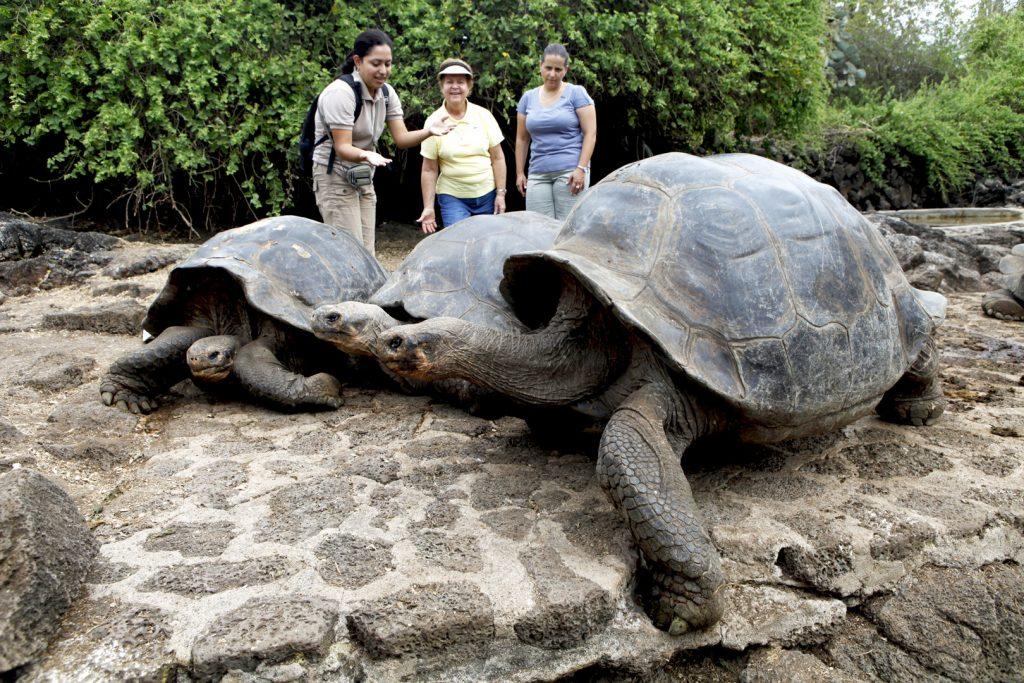 Tartarugas Gigantes de Galápagos no Equador