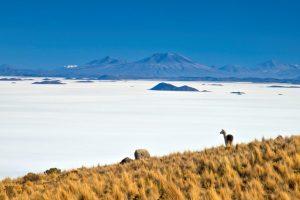 Salar de Uyuni: saiba como chegar e veja dicas sobre o destino!