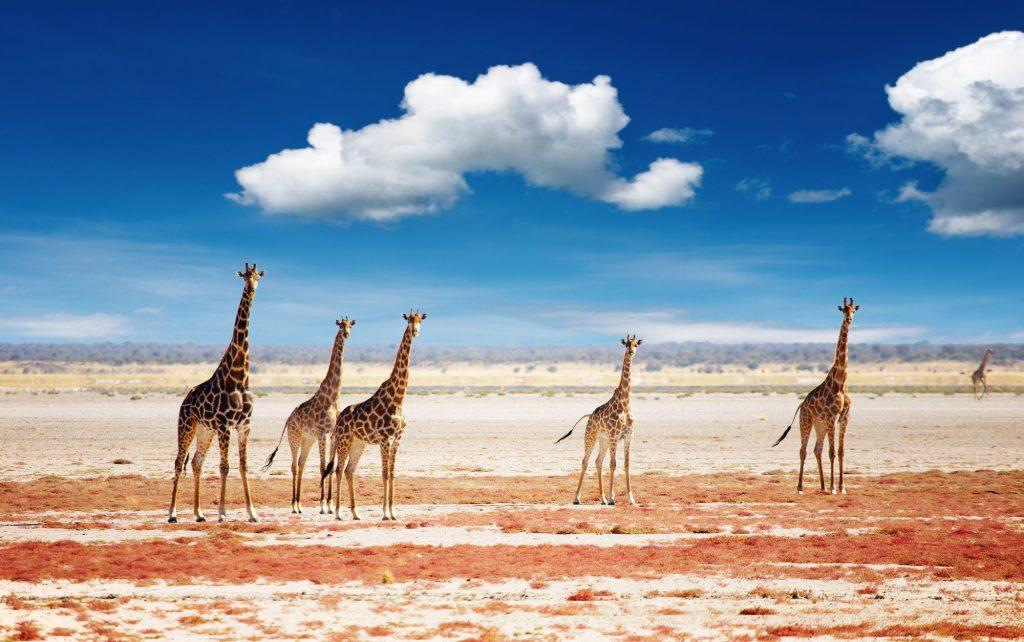 Namíbia - Pacotes de viagem