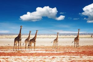 Namíbia: saiba por que fazer pacotes de viagem para conhecer a região