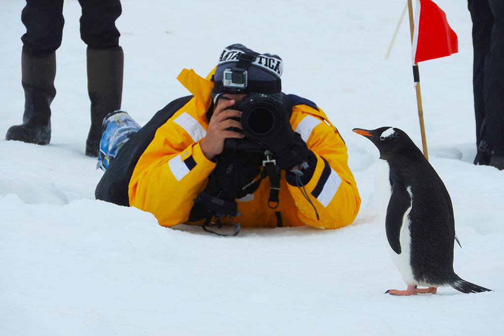 Expedição Antártica Pinguins - Fazer um cruzeiro de expedição pela Antártica ou Patagônia? Escolha aqui!