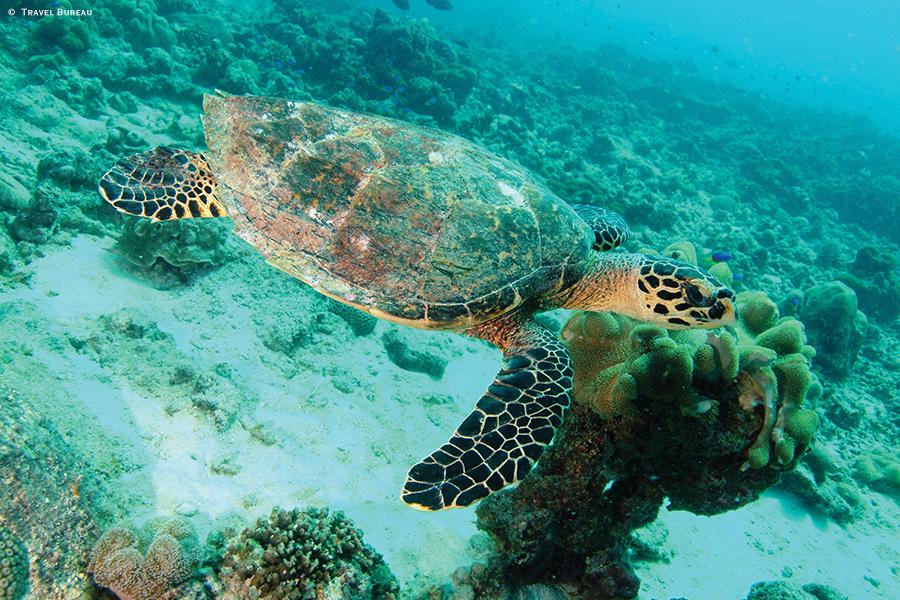 Ilhas Seychelles Hawkbill Turtle Travel Bureau - Ilhas Seychelles - Um outro mundo