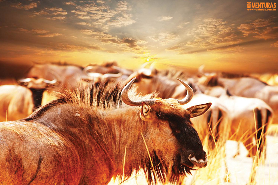 Kenya Tanzânia 01 - Kenya e Tanzânia - A natureza selvagem do leste