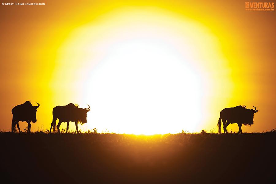 Kenya Tanzânia MaraPlainsCamp Wildlife GreatPlainsConservation 01 - Kenya e Tanzânia - A natureza selvagem do leste