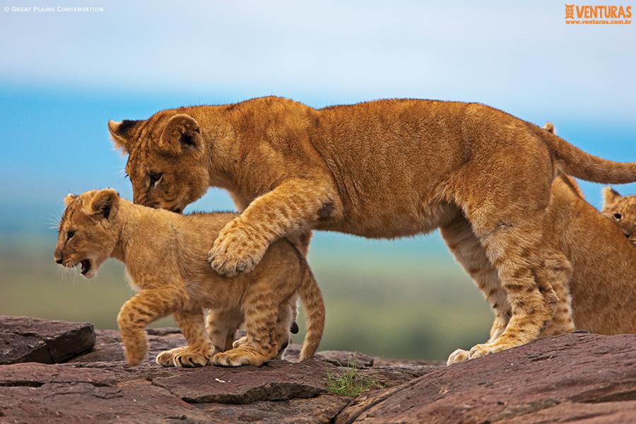 Kenya Tanzânia MaraPlainsCamp Wildlife GreatPlainsConservation 02 - Kenya e Tanzânia - A natureza selvagem do leste
