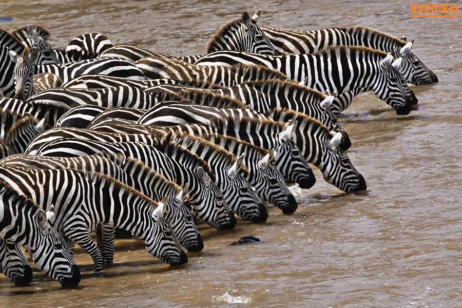 Kenya Tanzânia - Kenya e Tanzânia - A natureza selvagem do leste