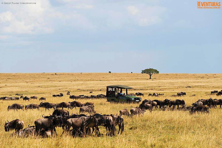MaraPlainsCamp Safari Experience GreatPlainsConservation - Kenya e Tanzânia - A natureza selvagem do leste