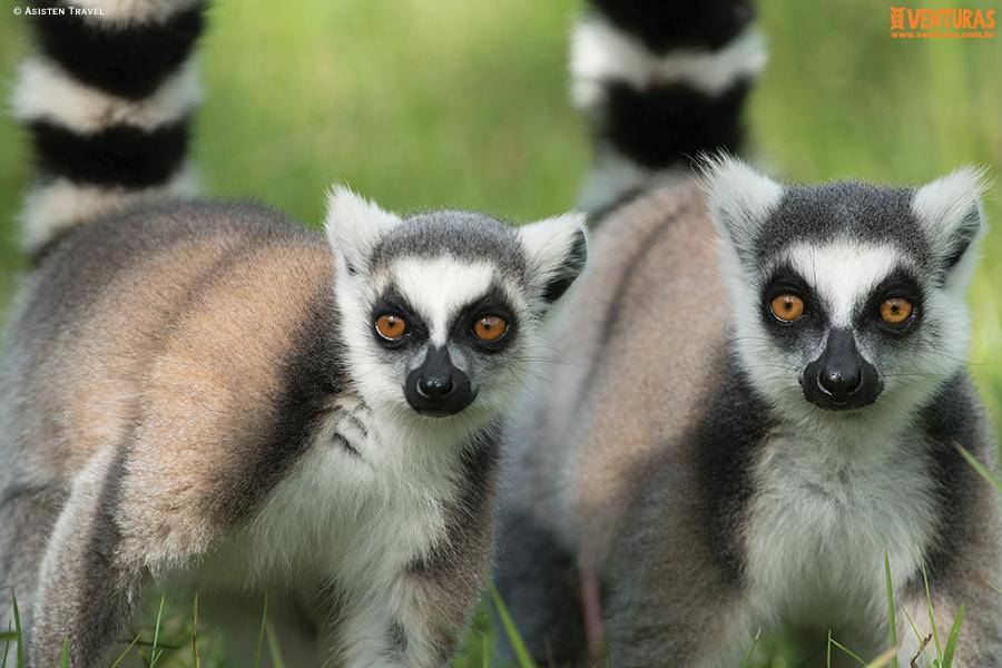 Madagascar Asisten Travel - Madagascar - Entre Lêmures e Boabás