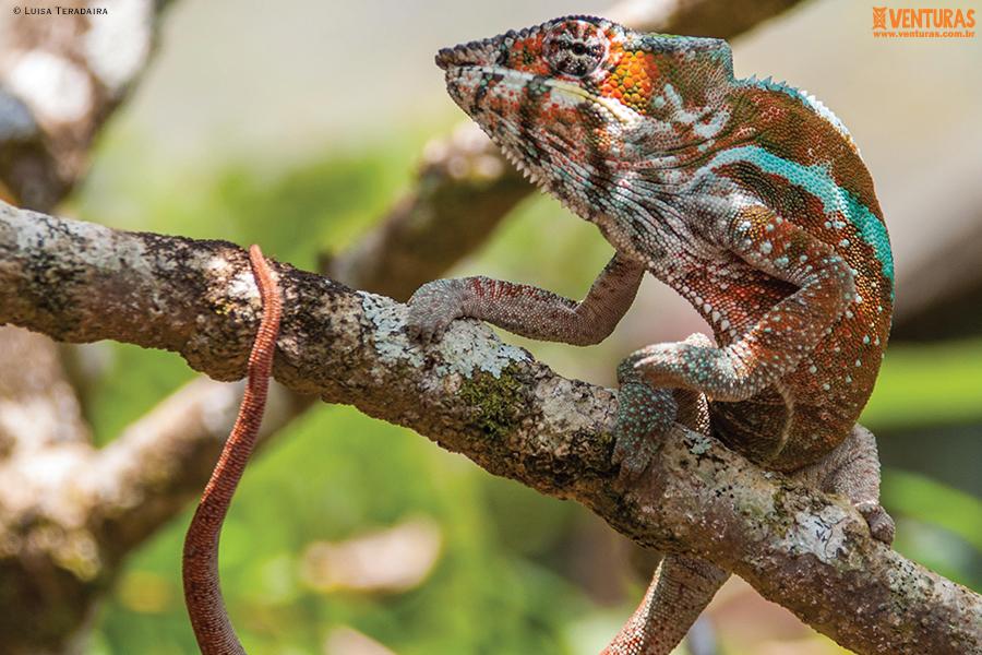 Madagascar Luisa Teradaira 01 - Madagascar - Entre Lêmures e Boabás