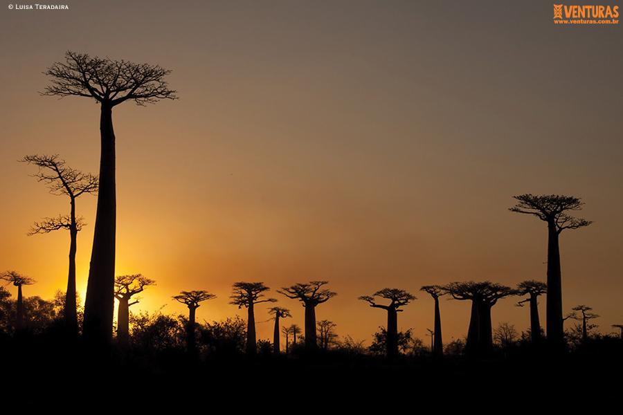 Madagascar - Luisa Teradaira