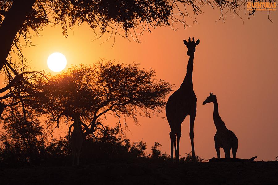 Namíbia 04 - Namíbia o deserto mais antigo do mundo - Terra de Contrastes