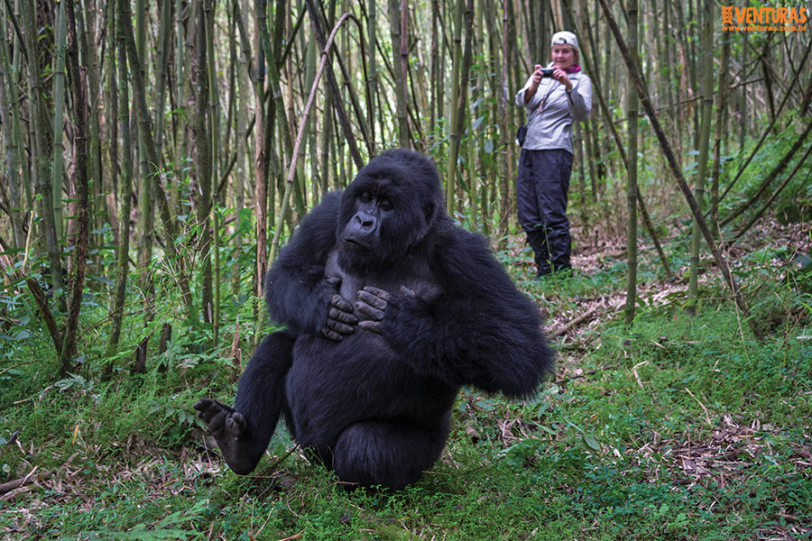 Ruanda e Uganda 02 - Ruanda e Uganda - Na terra dos gigantes