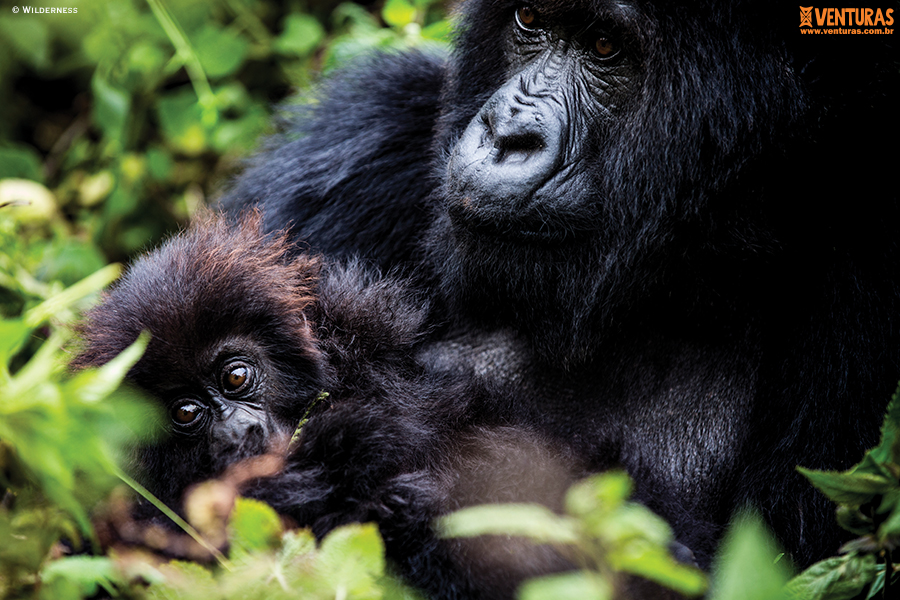 Ruanda e Uganda