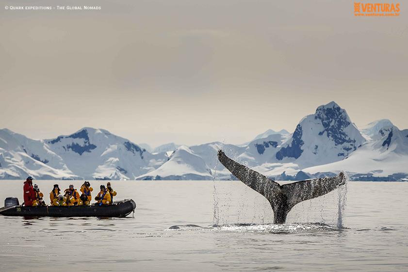 Antártida Quark expeditions The Global Nomads 10 - Antártida: por que conhecer esse lugar incrível