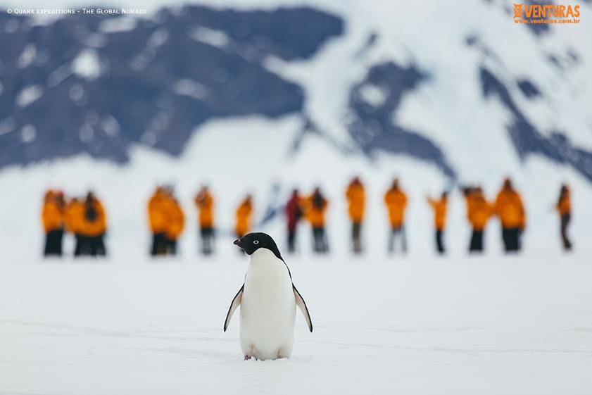 Antártida Quark expeditions The Global Nomads 11 - Antártida: por que conhecer esse lugar incrível