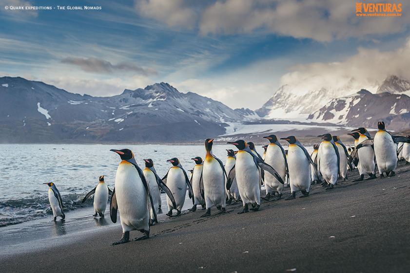 Antártida Quark expeditions The Global Nomads 12 - Antártida: por que conhecer esse lugar incrível