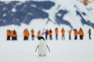 Antártida – O continente gelado