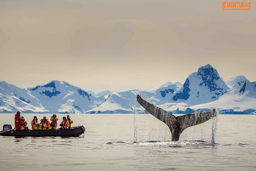 Antártida 04 - Antártida - O continente gelado