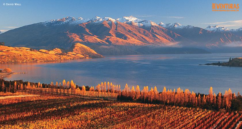 Nova Zelândia David Wall 01 - Nova Zelândia - Onde uma experiência leva à outra