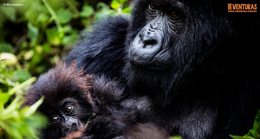 Ruanda Wilderness - Que tal fazer uma viagem espetacular neste ano? Veja nossas 12 melhores indicações para experiências inesquecíveis em 2020