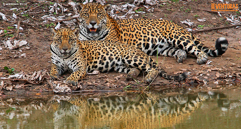 Pantanal Refúgio Lawrence Weitz - 8 feriados em 2020 e 8 sugestões de viagens de turismo de natureza